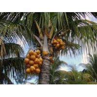 Пальмовое масло рафинированное, 100 гр