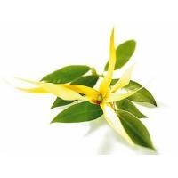 Иланг-иланг, 100 мл, натуральное эфирное масло