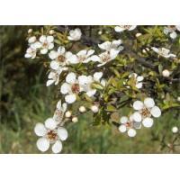 Чайное дерево, 10 мл, натуральное эфирное масло