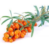 Экстракт Облепихи (плоды) СК-СО2, 10мл