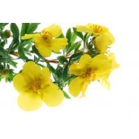 Экстракт Примулы вечерней (семена) СК-СО2, 10мл