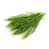Экстракт Хвоща (трава) СК-СО2, 10мл