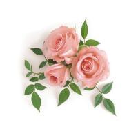 Роза чайная, 100 гр, отдушка Англия