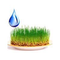 Зародышей пшеницы масло водорастворимое, 40 гр