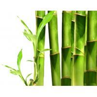 Бамбук и конопля, отдушка США, 10 мл