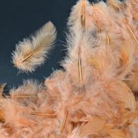 Перья персиковые 4*8 см, набор 100 шт